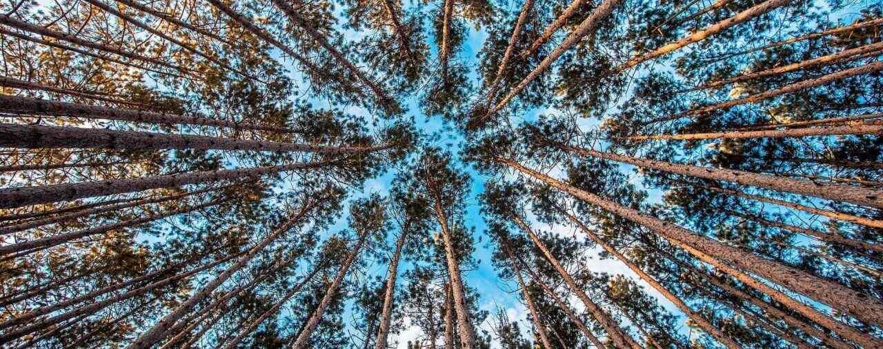 Nowe zasady uzyskiwania zezwolenia na wycinkę drzew już weszły w życie!